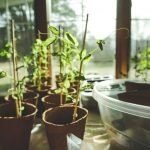 Creating Your Own Indoor Garden